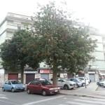 Segnalati alberi da potare in Via De Gemmis, angolo Via Campione
