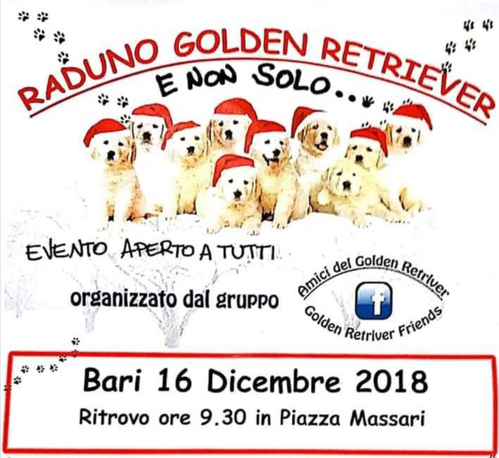 Natale con i Golden Retriever