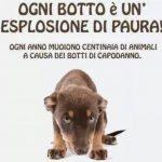NO ai botti di Capodanno: dialogo tra un cane e il suo padrone