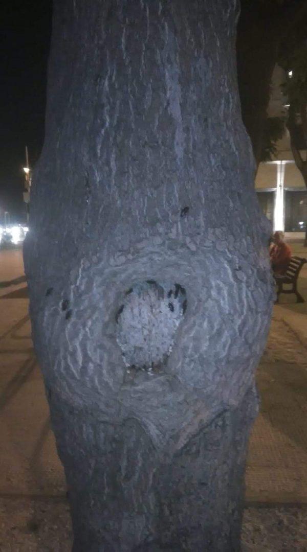Piazza Diaz invasa dalle blatte