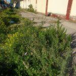 Via Falcone e Borsellino: da via simbolo di legalità a strada in completo abbandono